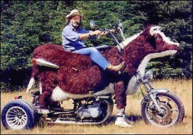 Необычные мотоциклы. Мотоцикл корова